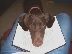 Bummer the pic didn't load--bet you've never seen a dog reading before.